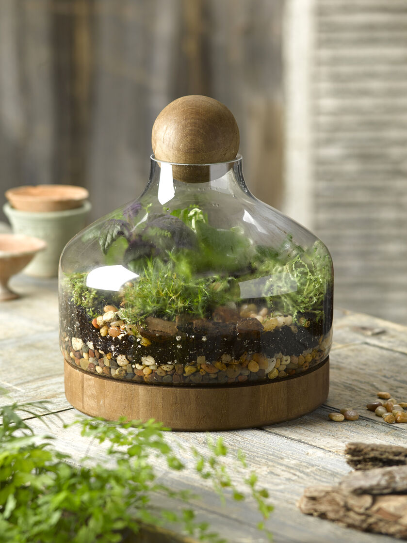 Glass & Wood Terrarium, Large  Gardener's Supply. Light Gray Kitchen Cabinets. Duvet Covers. Double Refrigerator. Rustic Modern Coffee Table. Double Vanity. Mens Closet Ideas. Floating Shelves Above Toilet. Grey Upholstered Bar Stools