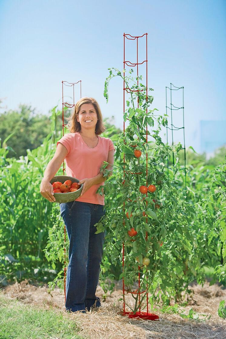 Tomato Trellis Stacking Tomato Ladder Gardener S Supply