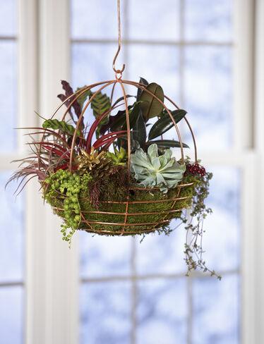 copper wire globe hanging basket air plant terrarium. Black Bedroom Furniture Sets. Home Design Ideas