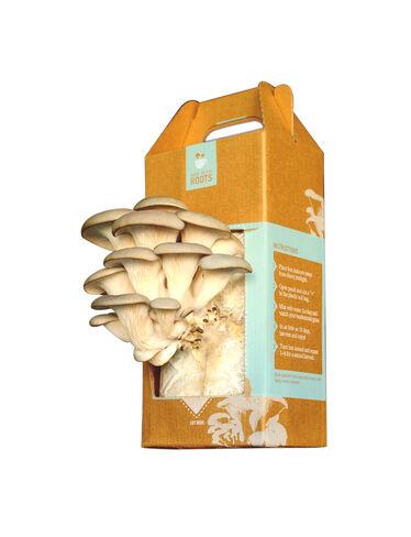 Oyster Mushroom Garden