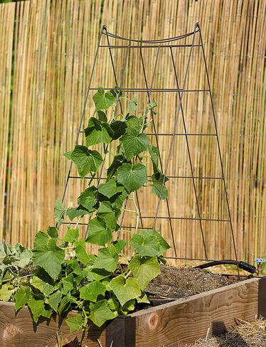 Squash Trellis Vegetable Trellis Wire A Frame