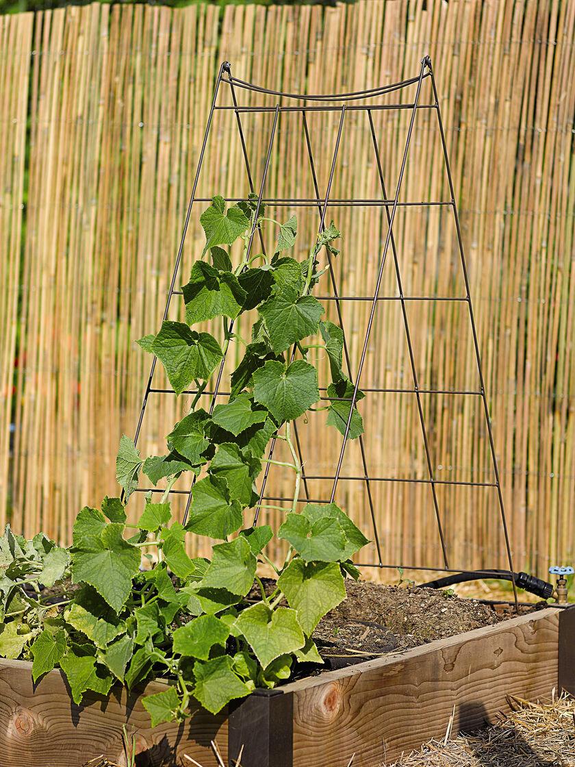 wire a frame trellis