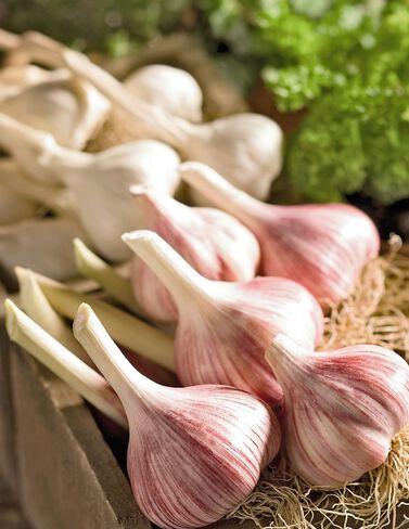 Organic Garlic Collection Garlic, Garlic Sets, Garlic Plants, Garlic bulbs, Garden Supplies, Vegetable Garden