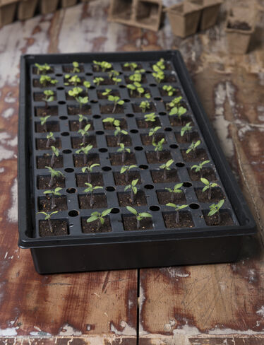 Smart Grow Seed Starter Kit