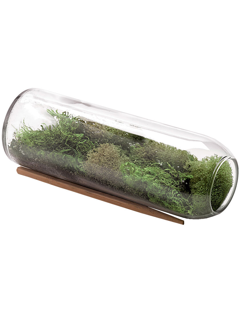moss terrarium bottle kit terrarium supplies gardener 39 s supply. Black Bedroom Furniture Sets. Home Design Ideas