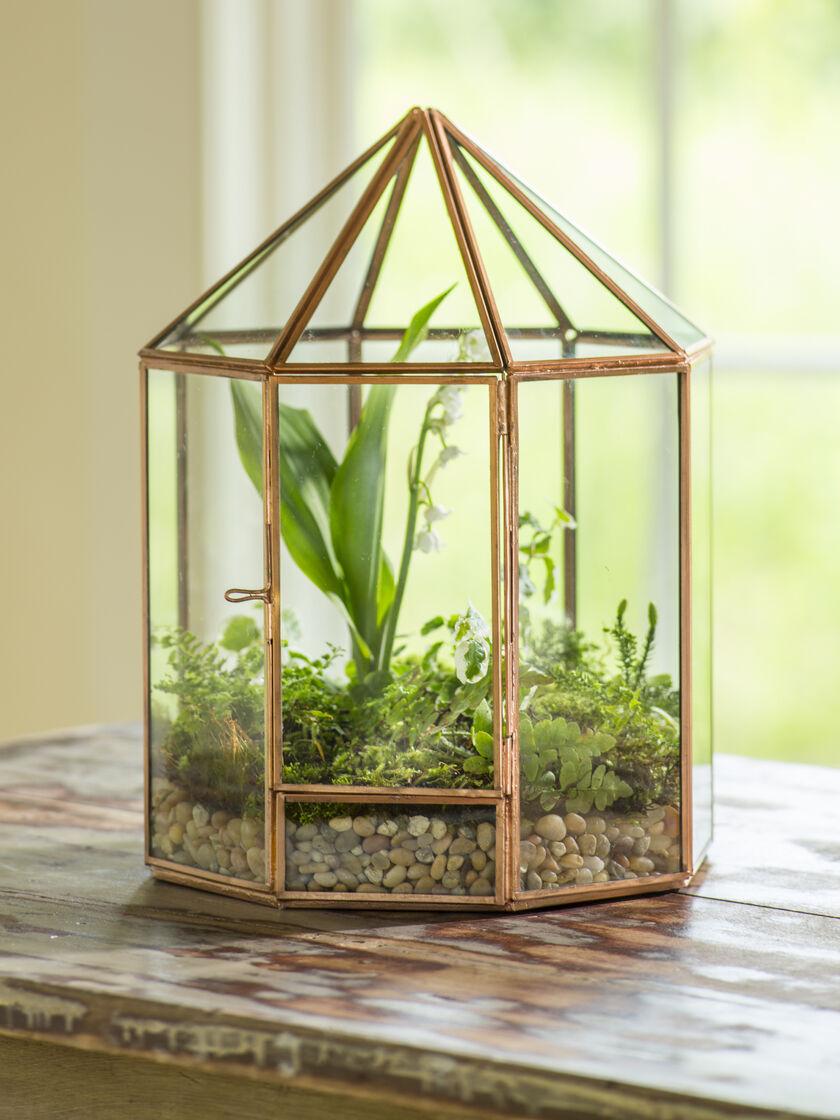 Cactus Glass House