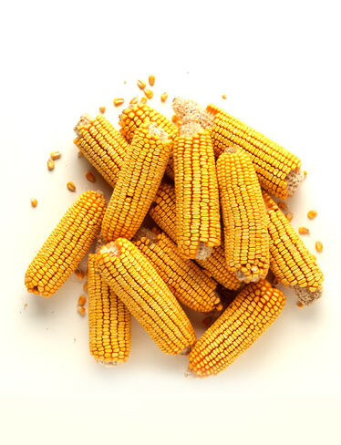 Corn Cobs, Set of 12
