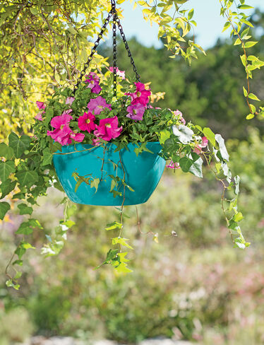 Viva Self-Watering Hanging Basket