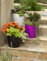 WaterEase Self-Watering Planter