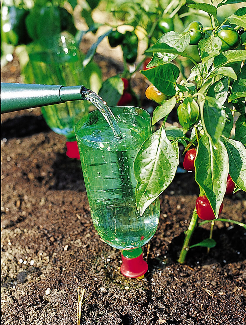 Aquacone plant waterer watering devices for Plant waterer
