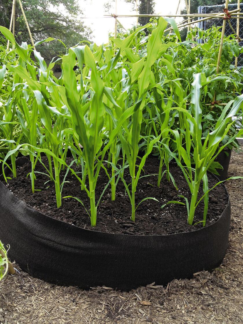 Big Bag Bed Raised Garden Bed in a Fabric Grow Bag Gardenerscom