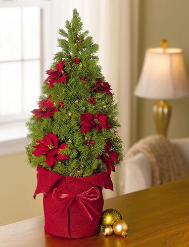 Mini Spruce Christmas Tree - Tabletop Spruce Tree ...