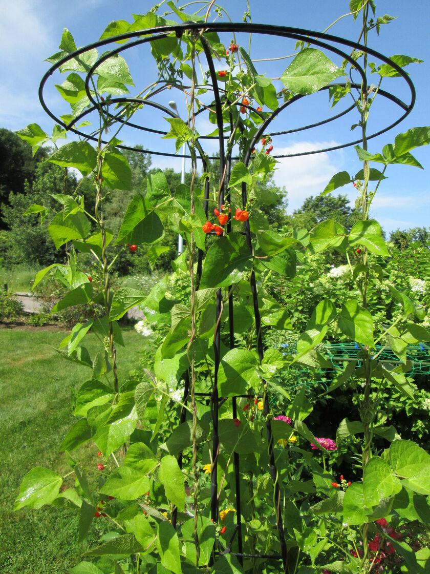Garden Trellis Essex Umbrella Shaped Tuteur Gardener S Supply