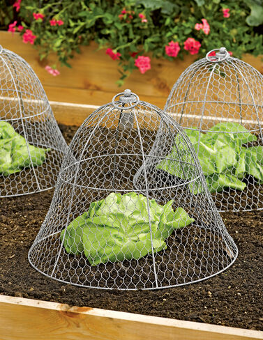 Chicken Wire Cloche Cloche, Garden Cloche, Frost Protection, Garden Fabric, Frost Blanket, Garden Supplies, Row Cover