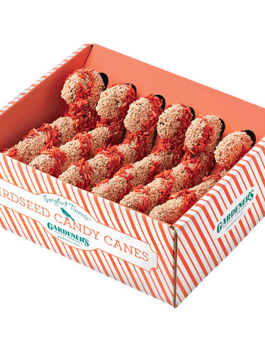 Songbird Tweets® Candy Canes, Set of 6