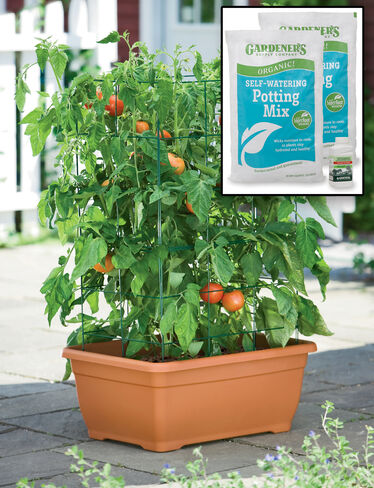 Organic Tomato Success Kit