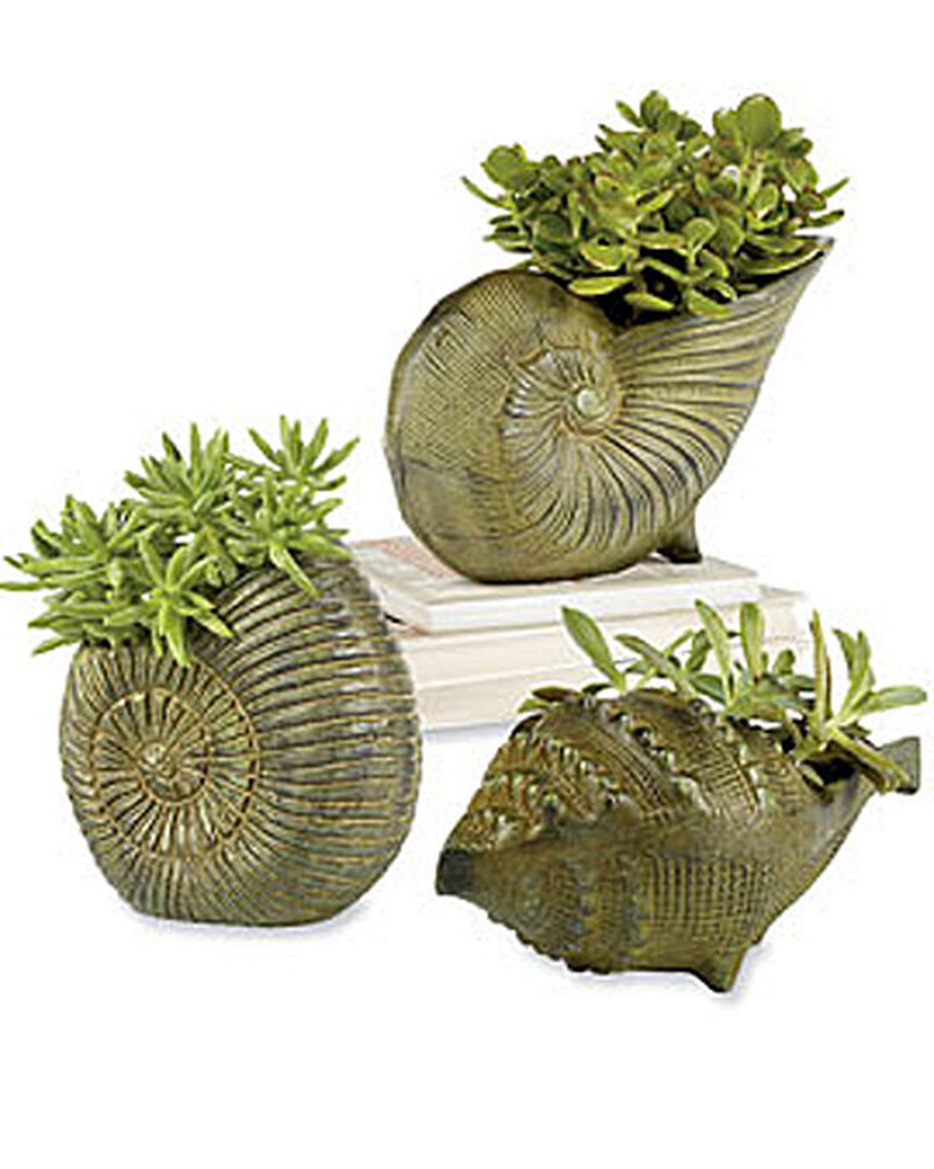 Planters sea shell planters buy sea shell planters for Gardeners supply planters