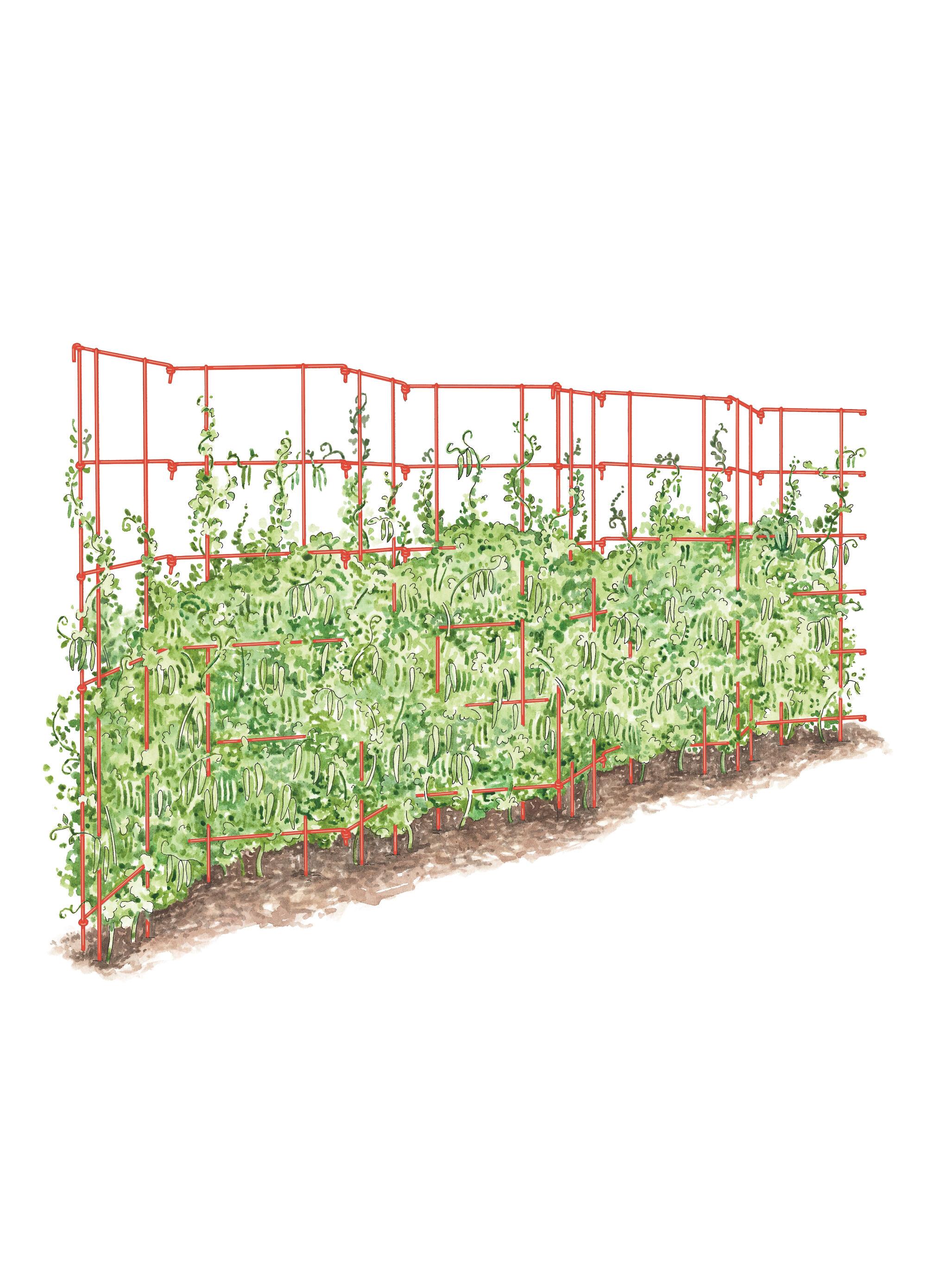 how to build a tomato trellis