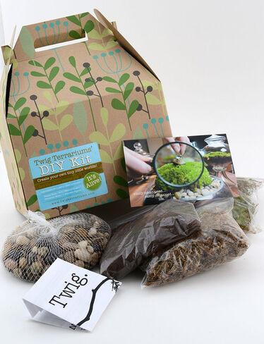 terrarium kit diy terrarium kits gardener 39 s supply