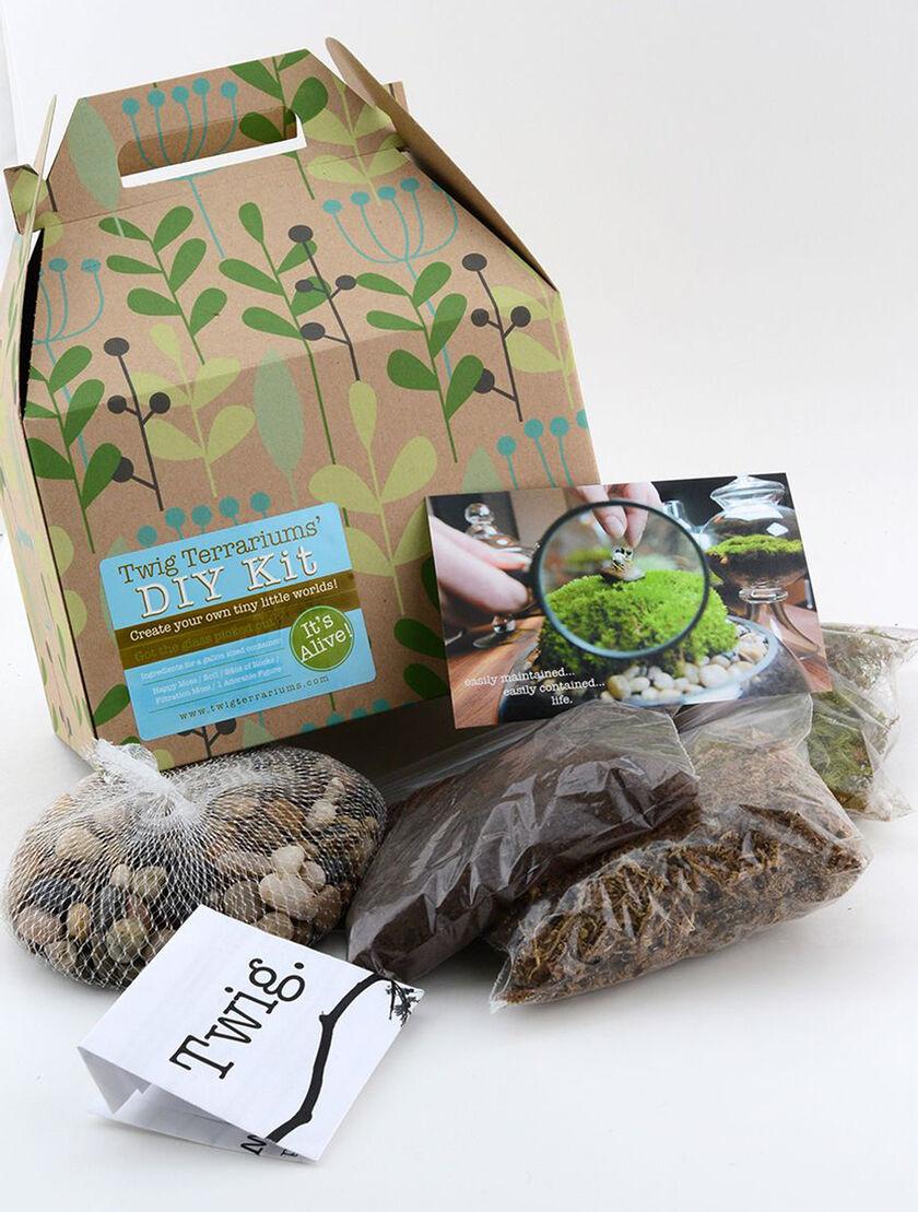 terrarium kit diy terrarium kits gardener 39 s supply. Black Bedroom Furniture Sets. Home Design Ideas