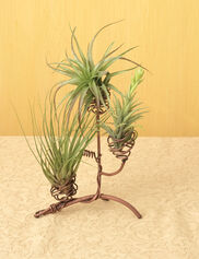 Copper Wire Air Plant Tree
