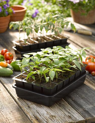 GrowEase Seed Starter Kit, 24 Cells