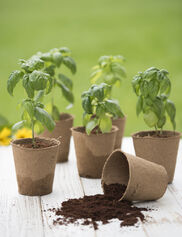 "4"" Round Biodegradable Pots, Set of 6"