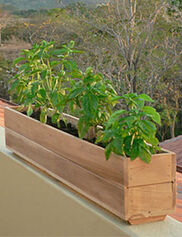 Teak Windowboxes, 6""