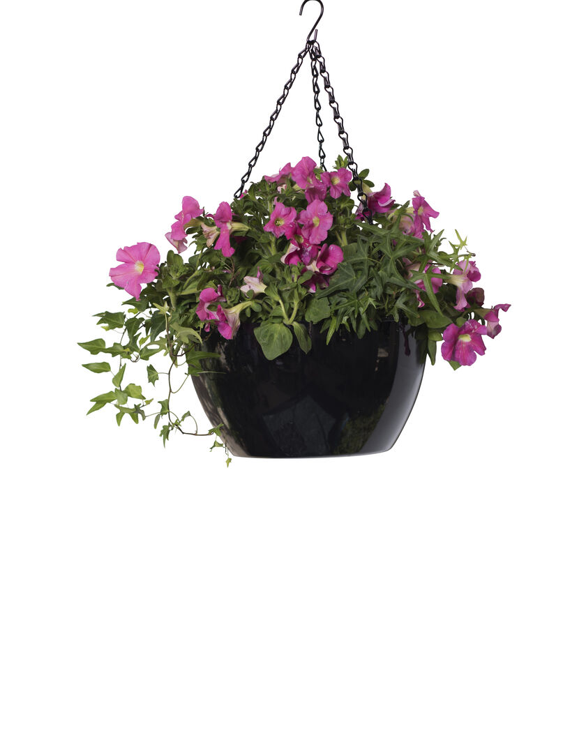Viva Self-Watering Hanging Basket - Hanging Flower Baskets