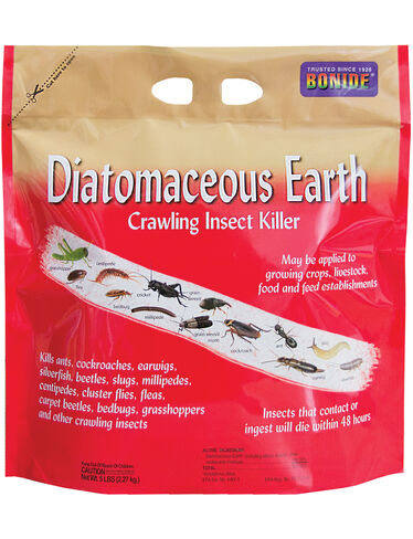 Where To Buy Diatomaceous Earth To Stop Ants Fleas Bed