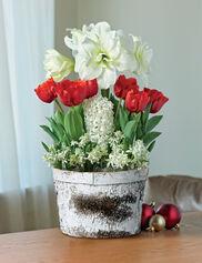 Indoor Gardening Houseplant Care Gardener S Supply