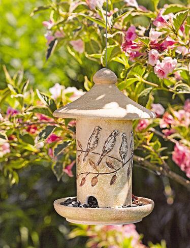 Perched Birds Bird Feeder