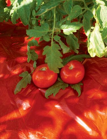 Red Tomato Mulch