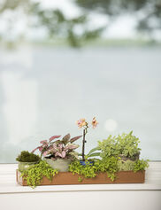 Rectangular Plant Trays