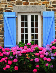 Country Hydrangeas Outdoor Art
