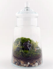 fairy-garden-terrarium-kit