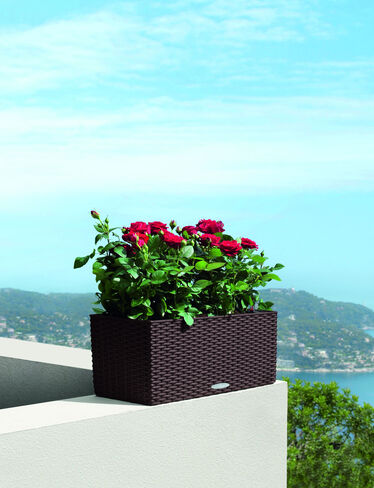 Balconera Cottage Wicker Self-Watering Window Box, 20""