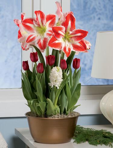 Specialty Bulb Garden