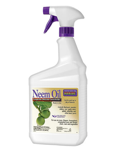 Aphids? Get Neem Oil Spray for Aphid and Fungus Control
