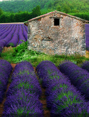 La Lavender Outdoor Art