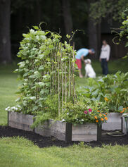 Expandable Willow Trellis