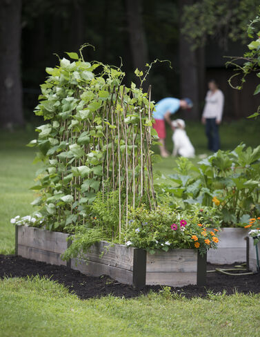 The Garden Oracle SUPPORTS TRELLISES