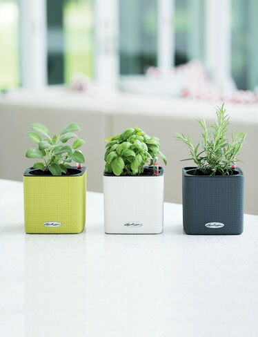 Mini Cube Self-Watering Herb Planter