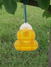 Yellow Jacket and Wasp Trap
