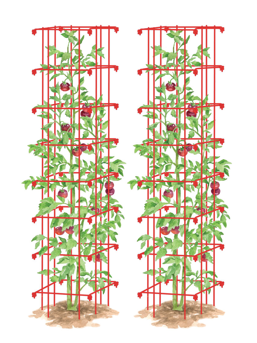 Tall Tomato Cages Tomato Tower Set Of 2 Gardeners Com