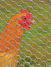 Poultry Fence, 4' x 50'