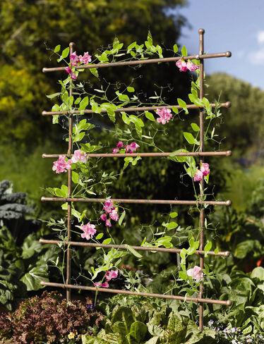 Jardin Ladder Trellis