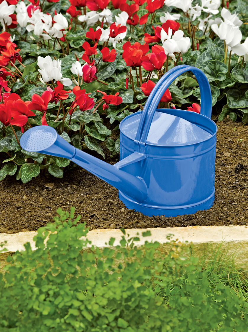 Colorful metal watering can - Sprinkling cans ...
