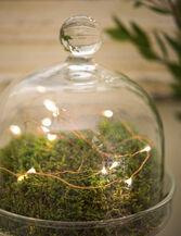 Fairy Light String, 50'