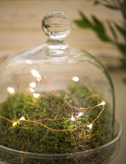 *Fairy Light String, 5'